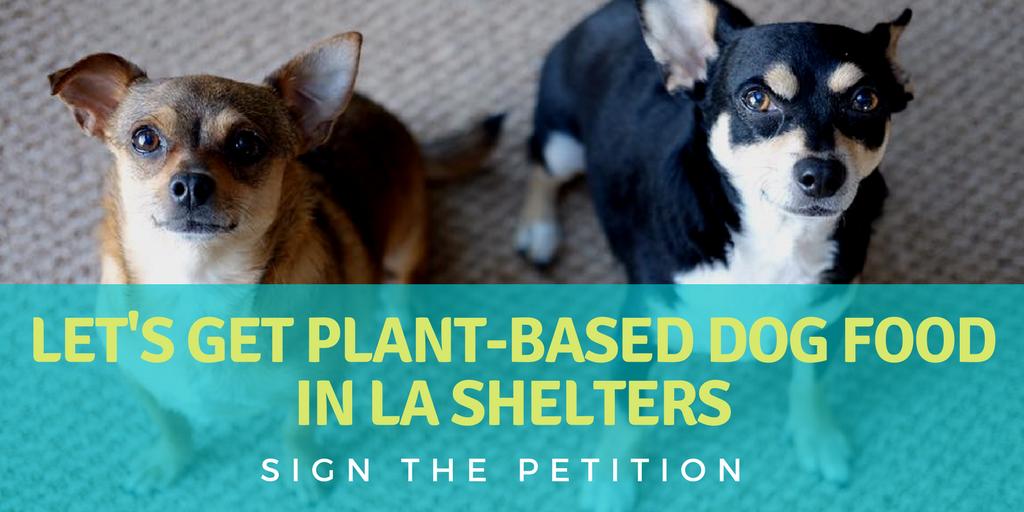 LA shelters