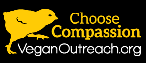 Bumper Sticker – Choose Compassion
