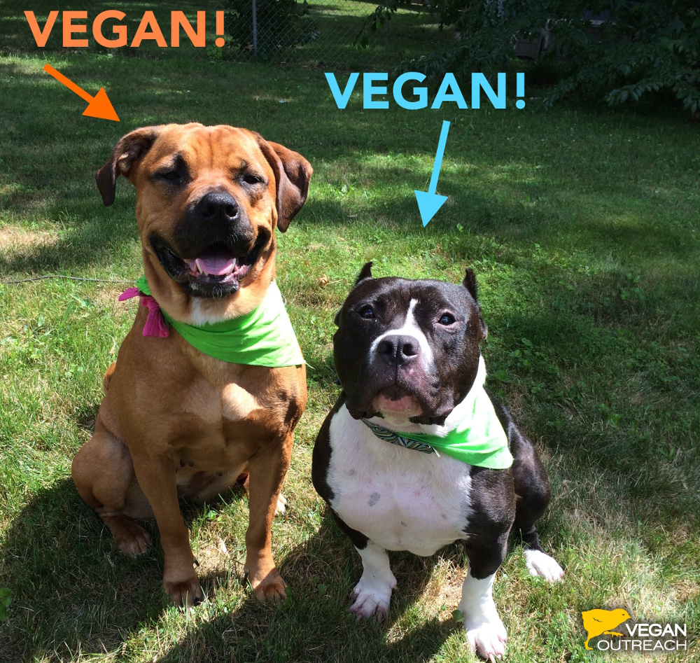 Paco and Patrona share about their vegan diet on the Vegan Outreach blog!