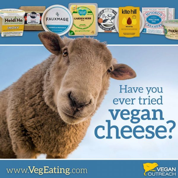 have you tried vegan cheese?