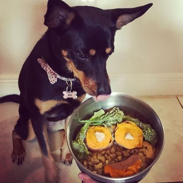 Can Your Dog be Vegan""